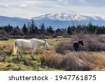 Bucolic Outdoor Landscape With...
