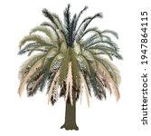 Big Palm Tree Vector Stock...