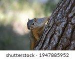 Squirrel Climbing Tree In Park