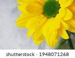 Part Of A Macro Yellow Daisy...