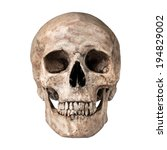 Human Skull On Isolated White...