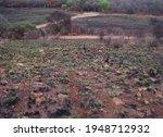 Grassland With Black Stick...