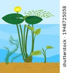 yellow water lily plant with... | Shutterstock .eps vector #1948725058