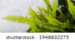 The Leaves Of Ferns Are Often...