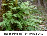 Winter Woodland  Textured Tree...