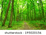path in spring green forest   Shutterstock . vector #195020156