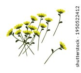 yellow green chrysanthemums... | Shutterstock .eps vector #1950522412