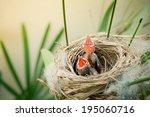 Little Young Birds In A Bird...