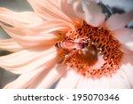 sunflower and bee in garden