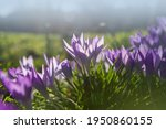 spring background with... | Shutterstock . vector #1950860155