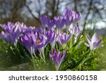 spring background with... | Shutterstock . vector #1950860158