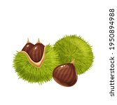 raw chestnuts vector... | Shutterstock .eps vector #1950894988