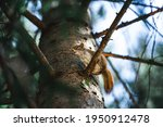 Squirrel Climbing Up A Tree...