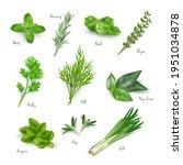 green herbs set isolated on... | Shutterstock .eps vector #1951034878