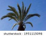 Tropical Palm Tree On A Blue...