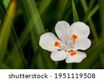 In Focus A White Flower  With...
