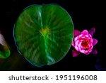 Beautiful Lotus Leaf Near The...