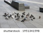 Pigeons In Manhattan New York...