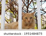 Ginger Cat Resting Behind White ...