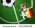 Soccer Jack Russell Terrier ...