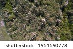 Rural Landscape. Aerial Top...