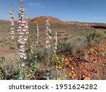 Wildflowers And Red Rock...