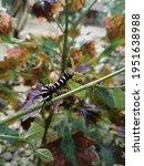 A Caterpillar On A Flower...
