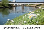 Spring Flowers And A Bridge...