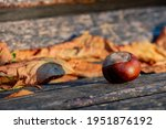 Chestnut On A Bench  In The...