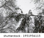 winter in the park landscape... | Shutterstock . vector #1951956115