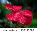 Macro Photography Of Drops Of...