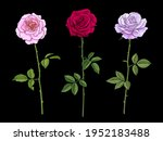 three rose flowers pink red and ... | Shutterstock .eps vector #1952183488