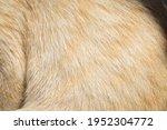 Focus Of Cat Fur   Cat Fur...