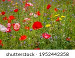 Summer Nature Background With...