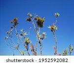 Branches And Clusters Of...