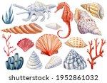 Seashells  Seahorse  Coral On...