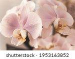 Beautiful Gentle Orchid Flowers ...