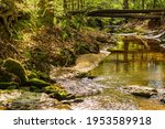 Logs Cross A Shallow Stream...