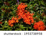 beautiful red spike flower...   Shutterstock . vector #1953738958