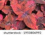 Colorful Botanical Pattern...