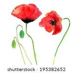 Poppy Flowers  Watercolor...