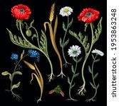 botanical flowers such as... | Shutterstock .eps vector #1953863248