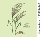 background with teff  plant  ...   Shutterstock .eps vector #1954396945
