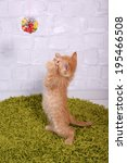 Stock photo cute little red kitten on fluffy green carpet on light wall background 195466508