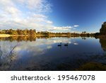 two black swans swimming on a... | Shutterstock . vector #195467078