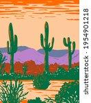 Saguaro Cactus In Sonoran...