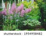 Mixed Garden Shady Border With...