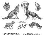 gray wolf set. gray wolf. a...   Shutterstock .eps vector #1955076118