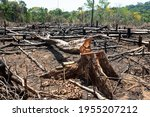 Small photo of Amazon rainforest illegal deforestation landscape view of trees cut and burned to make land for agriculture and cattle pasture in Para, Brazil. Concept of ecology, environment, global warming.