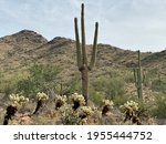 How Many Varieties Of Cacti Are ...